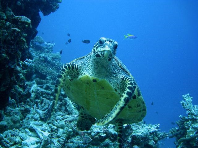 Mabul World Turtle Day
