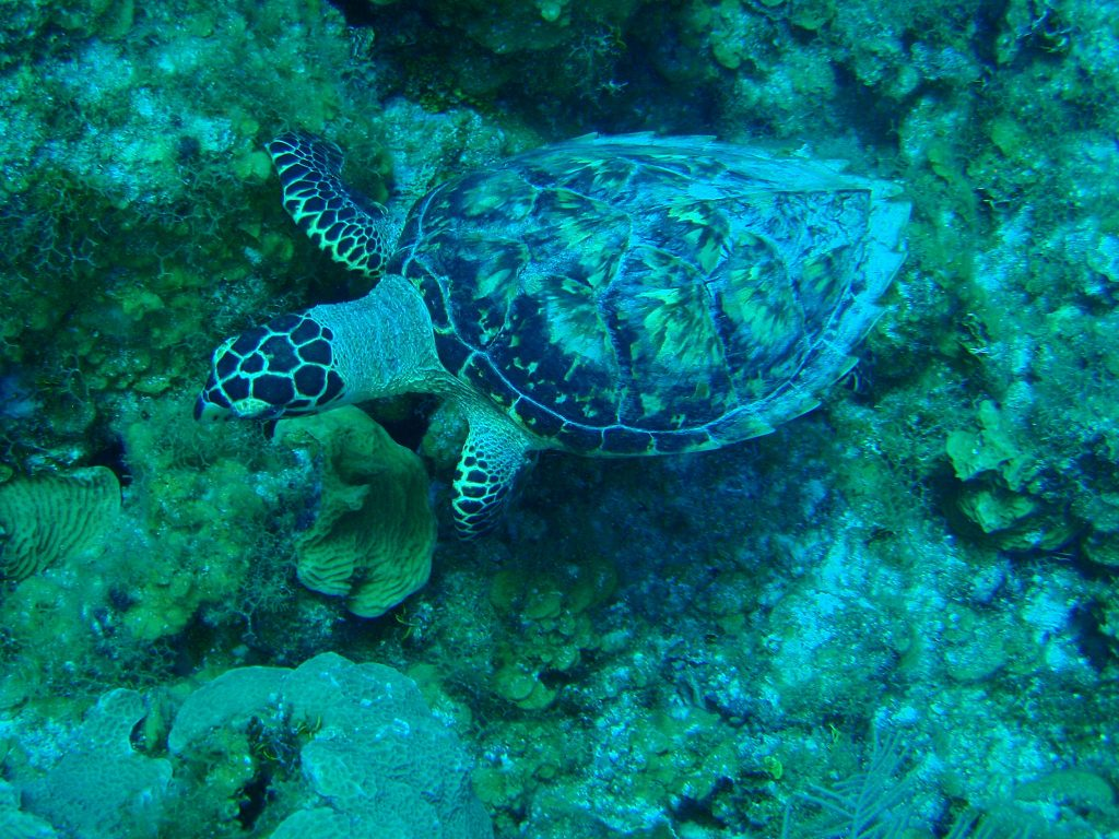Image 6 - Turtle Diving, Cayman Islands